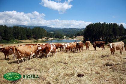 La Calabria: terra, sole, cibo sano che dalla terra arriva sulle nostre tavole.